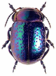 Metallic #beetle ~ETS