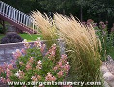 Karl Forester Grass is a great addition to any landscape. It's also deer resistant and easy to care for. Must plant these at my house! Hydrangea Care, Hydrangeas, Hydrangea Landscaping, Septic Tank, Flowering Shrubs, Patio Ideas, Yard Ideas, Landscape Design, Home And Garden