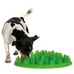 Turn your dog's meal into a challenging game ... Gibbs needs this! He's such a little pig.
