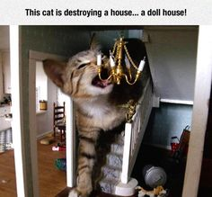 This cat is destroying...