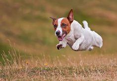 Flying   #dog  #photography