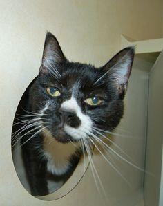 """Hey can I have some catnip please?"" - Smokey"