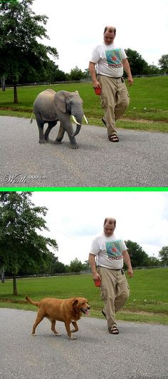 """Fake - It is """"not"""" a dwarf/pygmy elephant - There are pygmy elephants which stand 8 1/2 to 9 feet tall........ The original image is on the bottom. (updated 10/25/2014)"""