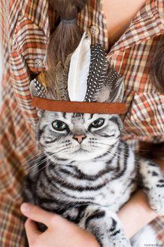 um gato bonito