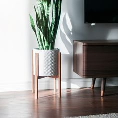Basking in the cool winter sun. This is a limited edition mahogany plant stand. Now available.