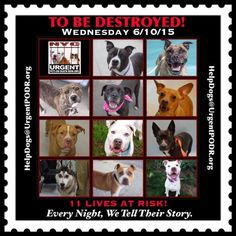 #URGENTPODR TBD LIST 6/10/15 NYCACC SHELTERS. **11** Adoptable dogs at high risk. Please RS adopt Foster pledge. # SaveThemAll