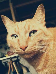 Maddú #red #cat