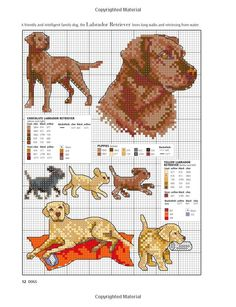 Picture your Dog in Cross Stitch: Claire Crompton