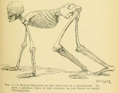 Artistic Anatomy of Animals by Édouard B. Cuyer 1852