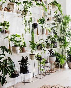 Check out the new Botanical Emporium by @ivymuse_melb over on @thedesignfiles today. If you've ever wondered what plants to buy for your home you can now pop into their new store in Armadale and select from the huge range as well as a curated collection of art, ceramics, jewellery and homewares. Can't wait to get in there. Congrats @huntandbow @signedandnumbered  #ivymuse #botanicalemporium #plants
