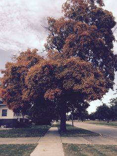 Falltime