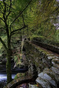 "Hermitage bridge, Perthshire, Scotland - not technically a ""covered bridge"" except for the trees and moss and Scottish aura..."