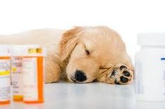 On-line Pharmacies: What You Need to Know Before Placing Your Order | Kingston Animal Hospital October 2013