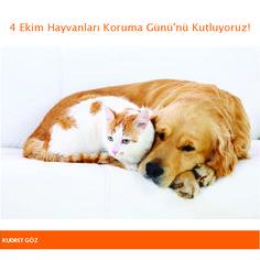 4 Ekim Hayvanları Koruma Günü'nü Kutluyoruz!