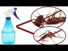 A Powerful Homemade Recipe That Makes All The Mosquitoes and Cockroaches Fall Dead Immediately! - - - This method consists of only 3 ingredients which are re. Homemade Face Moisturizer, Homemade Lip Balm, Homemade Skin Care, Homemade Recipe, Daily Beauty Tips, Home Beauty Tips, Beauty Secrets, Beauty Hacks, Organic Lip Balm