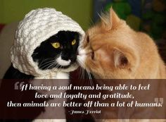 21 Quotes That Will Make You Want To Hug Your Pet