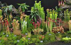 Carnivorous Plants & Venus Fly Traps