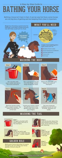 If you want to enjoy years of riding your horse, you need to take really good care of it. Here are some tips on how you should do it.