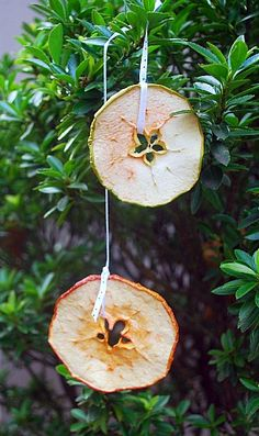 dried fruit ornaments - this would be cute to hang in the bird cages for my birds to nibble at