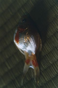 #MISAKI 2003-11 Beautiful Lights, Fish, Pets, Inspiration, Google, Photography, Animals And Pets, Biblical Inspiration, Inhalation