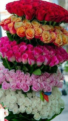 1 million+ Stunning Free Images to Use Anywhere Beautiful Flowers Photos, Beautiful Flowers Wallpapers, Exotic Flowers, Flower Photos, Beautiful Roses, Pretty Flowers, Creative Flower Arrangements, Large Flower Arrangements, Happy Birthday Flowers Wishes