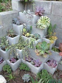Suculentas jardín