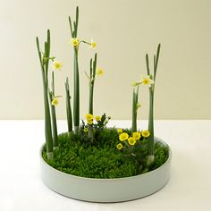 Floral Design, Art Floral, Go Green, Ikebana, Planting Flowers, Succulents, Centerpieces, Projects To Try, Herbs