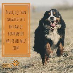 Fijne Bevrijdingsdag! #bevrijdingsdag #honden #thedogcompany