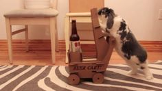 VIDEO: A guy trains his bunny to push a beer cart. An essential slave for 2015. And good use of the much redundant animal.