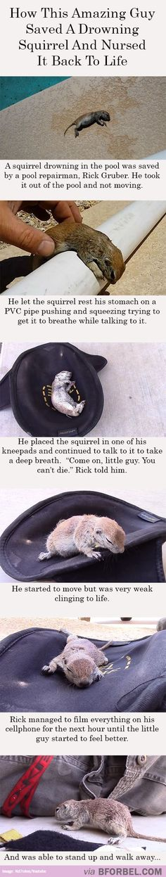 This Amazing Guy Nursed A Drowning Squirrel Back To Health…