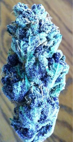 Pretty Blue Marijuana Bud