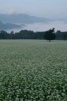 "ponderation: "" Early Autumn at Plateau in Fukushima by kazumi Ishikawa """