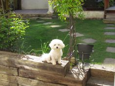 such a pretty little dog