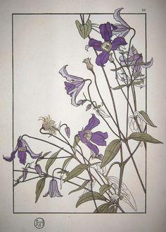 Foord 1906 lilies