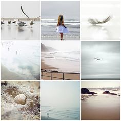 Beach scenes, shells and birds beautiful Deco Marine, Mood Colors, Summer Feeling, Album Photo, Collages, Beach Cottages, Beach Themes, Coastal Living, Nature