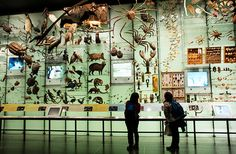 World's Best Natural History Museums - American Museum of Natural History, New York City