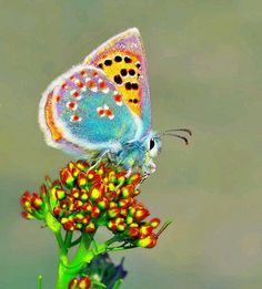 BEAUTIFUL BUTTERFLY... THE COLORS ARE AMAZING!!!