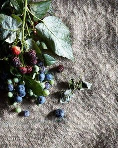 Beautiful, fresh-picked summer berries from Hungry Ghost Food & Travel has us wishing we were berry-picking right now! Summer Berries, Prop Styling, Food Photography Styling, Life Photography, Color Stories, Fruits And Veggies, Vegetables, Fresh Fruit, Deserts