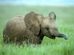 Dumbo<3