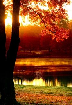 Imagine feeling the warm flow of the sun on your face and breathe in the crisp chill of the autumn air