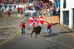Bullfight (tourada a corda) in the historical centre of Angra do Heroísmo, a UNESCO World Heritage Site. Terceira, Azores islands, Portugal