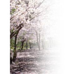 trees border ❤ liked on Polyvore