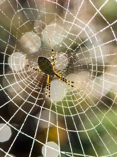 Spider's web Spider, Nature, Good Photos, Insects, Canvas, Photography, Spiders, The Great Outdoors, Mother Nature