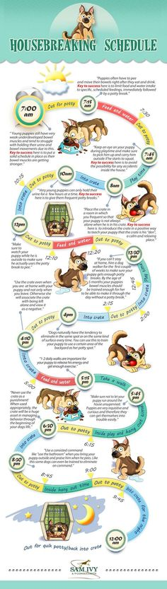 Pet Training - How to Housebreak a Puppy - Potty Training infographic. Topic: house training, crate training, dog poop, pee, This article help us to teach our dogs to bite just exactly the things that he needs to bite Puppy Training Tips, Training Your Dog, Training Quotes, Puppy Crate Training Schedule, House Training A Puppy, Agility Training, Training Plan, Dog Crate Training, Potty Training Puppies