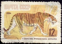 Russia Tiger on a postage stamp, Small Wild Cats, Love Stamps, Pattern Art, Art Patterns, Stamp Collecting, My Stamp, Postage Stamps, Lions, Science Nature