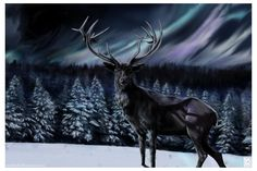 Yule~Northern Lights by *JaniceDuke on deviantART