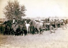 Rounding Up Mustangs on Cheyenne River.  It was taken in 1887 by Grabill, John C. H., photographer.
