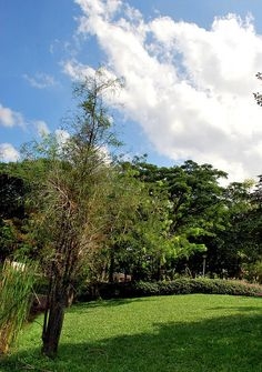 punggol park 2009