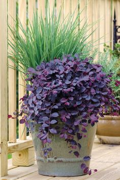 Embrace shrubs in containers with a well-devised plan to transplant them to the landscape in future years. Short Plants, Tall Plants, Garden Shrubs, Garden Plants, Container Plants, Container Gardening, Order Plants Online, Landscape Design Plans, Backyard Landscaping
