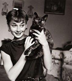 オードリーと猫